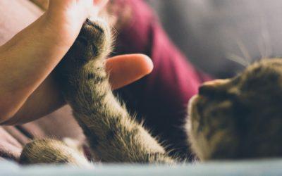 Konopná kosmetika pro zvířata, Zn.: Testováno na lidech