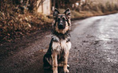 Výhody použití konopných gelů a mastí VETERCANN na zvířatech